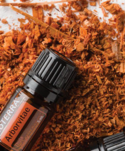 doTERRA-Arborvitae-Essential-Oil-Uses-250x340